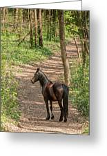 Brown Wild Horse Greeting Card
