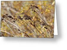 Brown Wildgrass Greeting Card