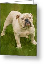 Bruce The Bulldog Greeting Card