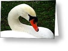 Bruges Swan 2 Greeting Card