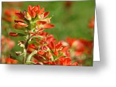 Brush Of Red Greeting Card