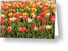 Brushed Tulips Greeting Card