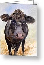 Brutus - Black Angus Cattle Greeting Card
