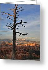 Bryce Canyon Dead Tree Sunset 3 Greeting Card