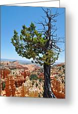 Bryce Canyon Fairyland Point Portrait Greeting Card