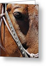 Bryce Canyon Horse Portrait Greeting Card