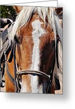 Bryce Canyon Horseback Ride Greeting Card