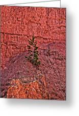 Bryce Canyon Pine Tree Greeting Card