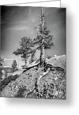 Bryce Canyon Treescape Greeting Card
