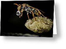 Bubble Blowing Wasp Greeting Card