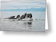 Bubble-net Group With Mountains In Alaska Greeting Card