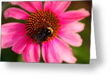 Bumble On A Pistil Greeting Card