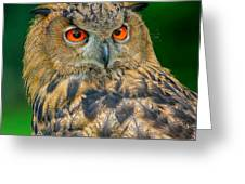 Bubo Bubo Greeting Card