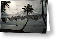 Buca Bay, Laundry And Palm Trees Greeting Card by James L. Stanfield