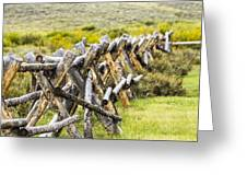 Buck And Rail Fence In The High Country Greeting Card