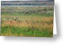 Buck In Field Greeting Card