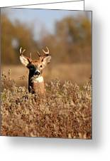 Buck In The Weeds Greeting Card
