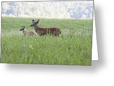 Buck In Velvet Greeting Card