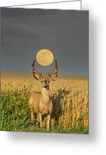 Buck Moon  Greeting Card