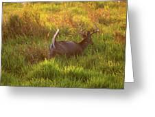 Buck On The Run  Greeting Card