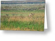 Buck Running In Field Greeting Card