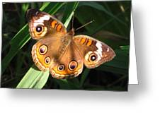 Buckeye Butterfly Greeting Card