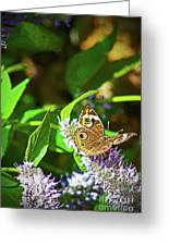 Buckeye Butterfly On The Move 1 Greeting Card