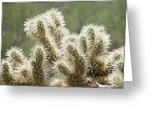 Buckhorn Cholla Greeting Card