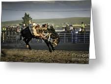 Bucking Bronco 2 Greeting Card