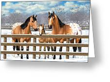 Buckskin Appaloosa Horses In Snow Greeting Card by Crista Forest