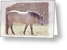 Buckskin Horse  Greeting Card