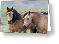 Buckskins Greeting Card