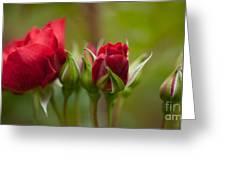 Bud Bloom Blossom Greeting Card