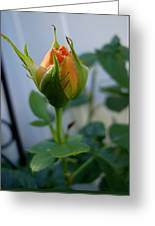 Bud Of A Rose Greeting Card