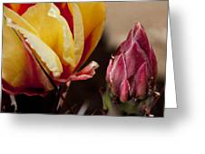 Bud To Blossom Greeting Card