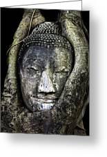 Buddha Head In Banyan Tree Greeting Card by Adrian Evans