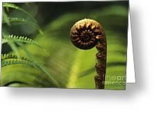 Budding Fern Greeting Card