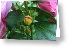 Budding Into Beauty Greeting Card