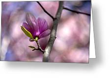 Budding Magnolia Greeting Card