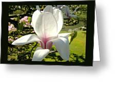 Budding Magnolia Greeting Card