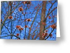Budding Maples Greeting Card