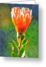 Budding Protea Greeting Card