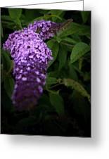 Buddleia Flower Greeting Card