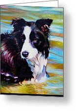 Buddy Border Collie Greeting Card by Kelly McNeil