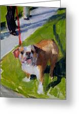 Buddy On A Red Leash Greeting Card