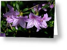 Buds And Blooms Greeting Card