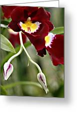 Buds And Blooms Orchid Greeting Card