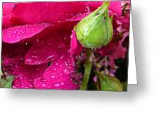 Buds And Drops Greeting Card