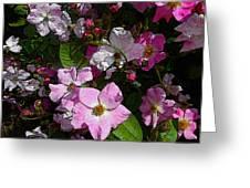 Buds And Petals- Pink Roses- Rose Bush- Floral Art Greeting Card