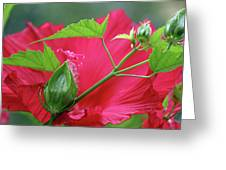 Buds Before Blooms Greeting Card